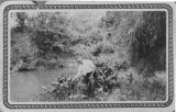 Man gathering aquatic plants growing beside the San Antonio River, Roosevelt Park, San Antonio,...