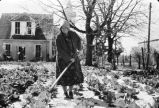 Mary Mika hoeing cabbage in garden behind her house, Panna Maria, Texas, 1970