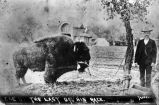 Man beside an American buffalo, 1891