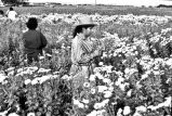 Flowers growing in field on Darson Persyn's farm, San Antonio, Texas, 1971
